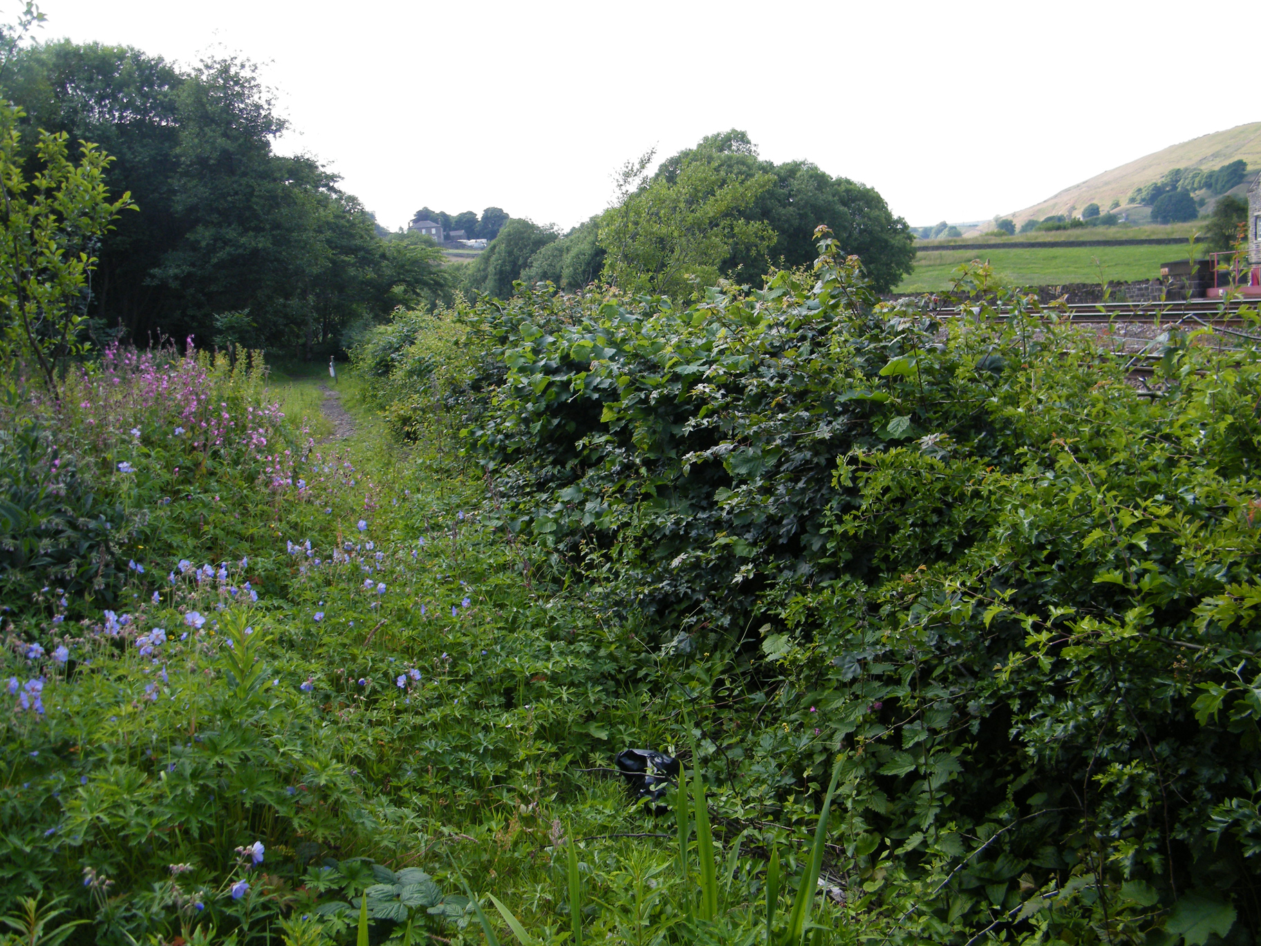 Hedge Laying Wild Service