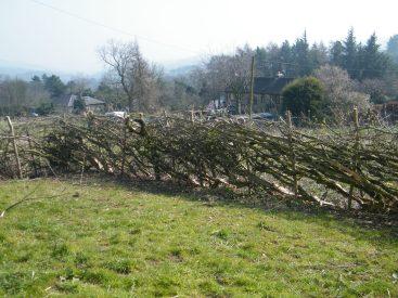 Hedge at langsett
